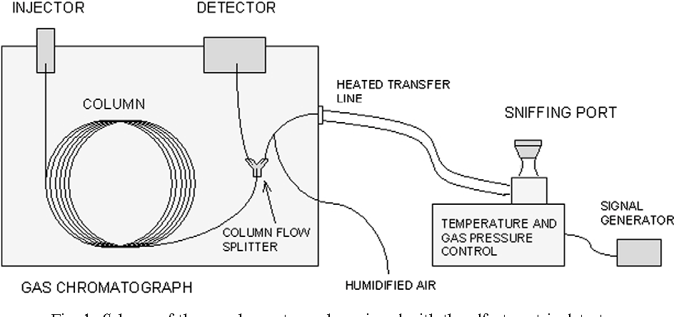Application of gas chromatography–olfactometry (GC–O) in
