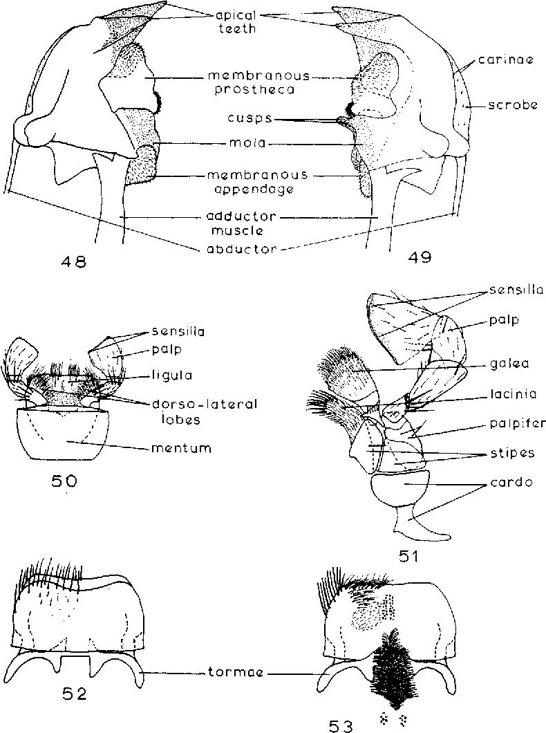 figure 48-53