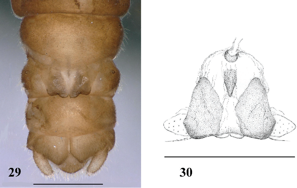 figure 29–30