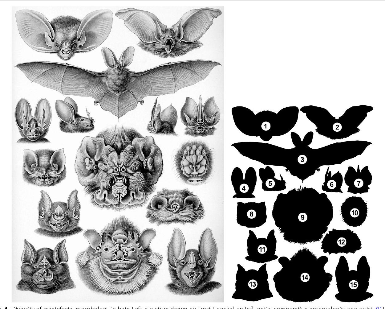 Figure 4 from Creating diversity in mammalian facial