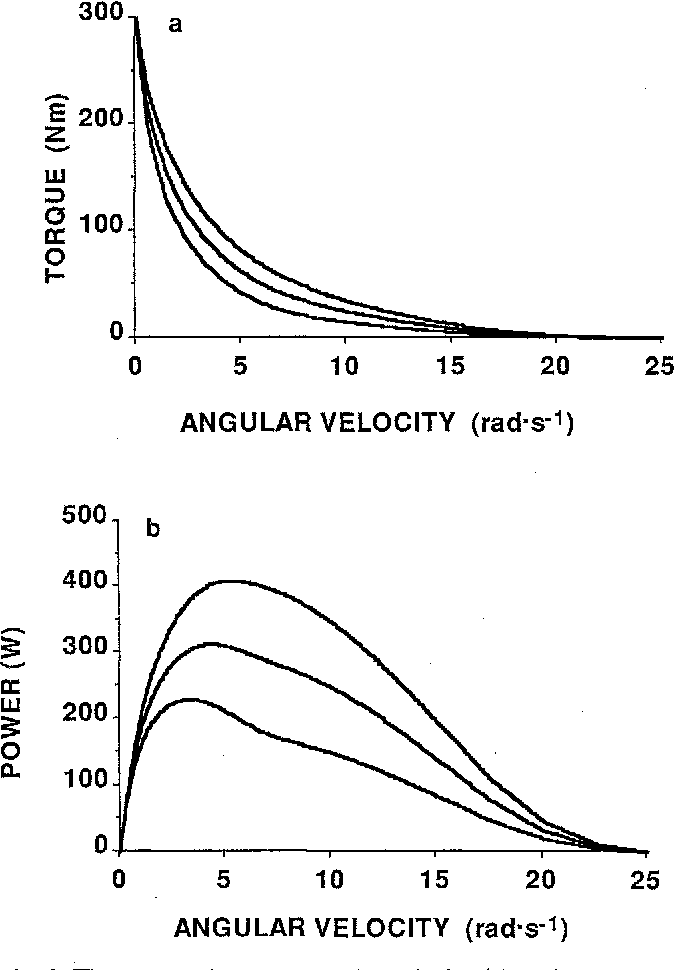 Figure 2 from Human skeletal muscle fibre types and force
