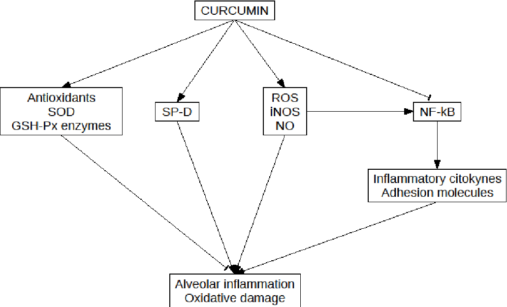 Curcumin use in pulmonary diseases: State of the art and