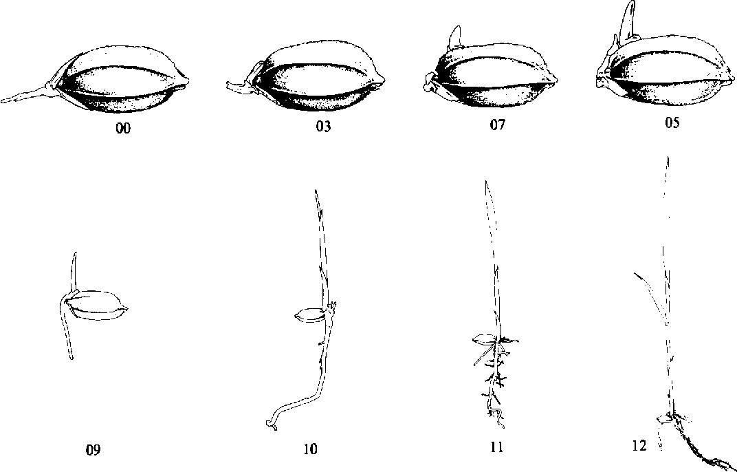 figure 241