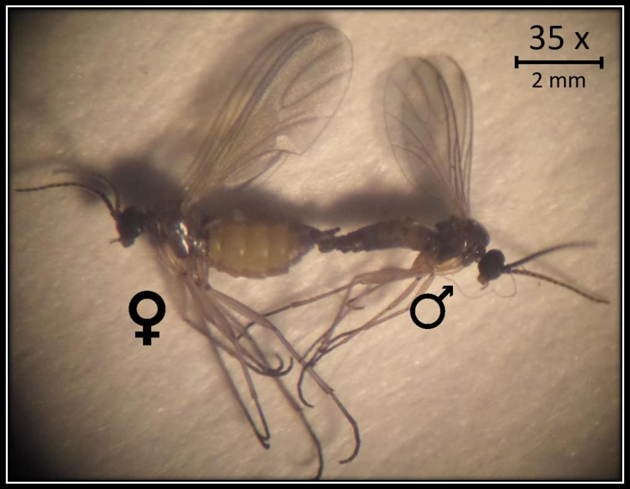 figure 1-1