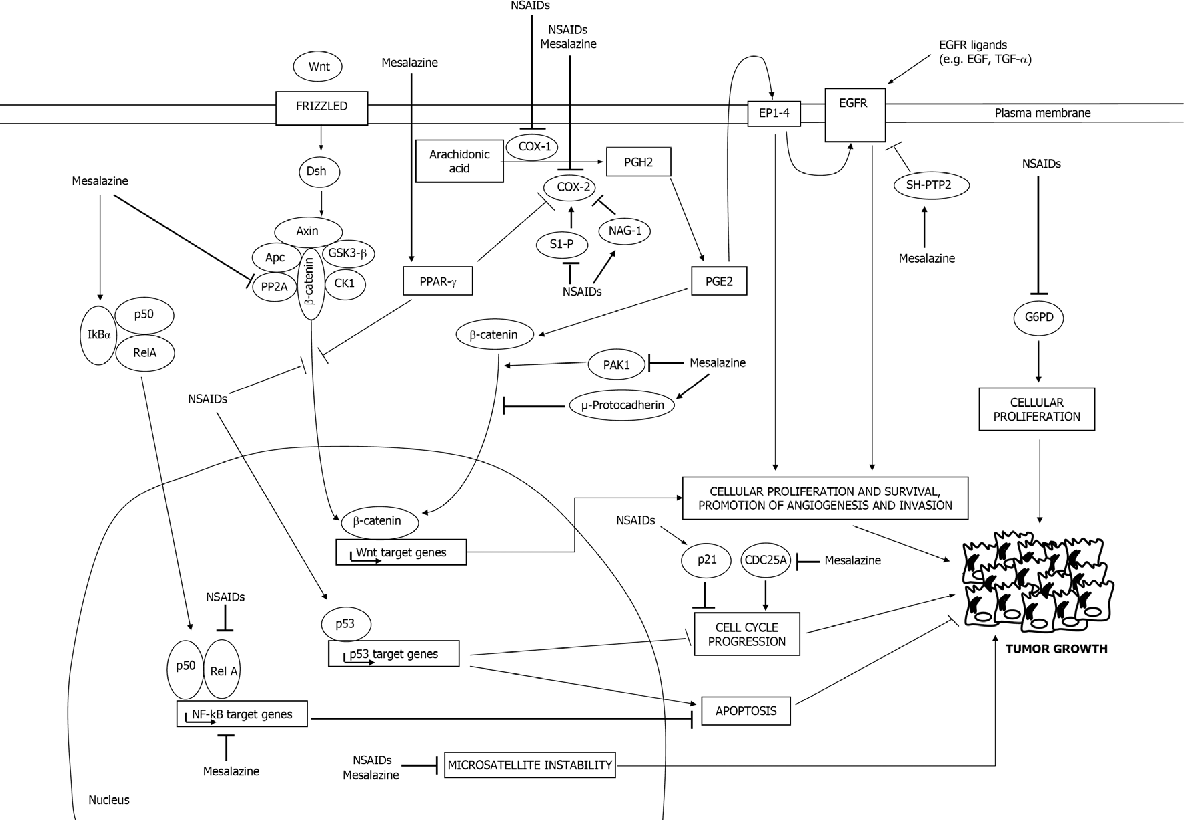 Figure 2 From Mechanisms Of Action Of Non Steroidal Anti Inflammatory Drugs Nsaids And Mesalazine In The Chemoprevention Of Colorectal Cancer Semantic Scholar