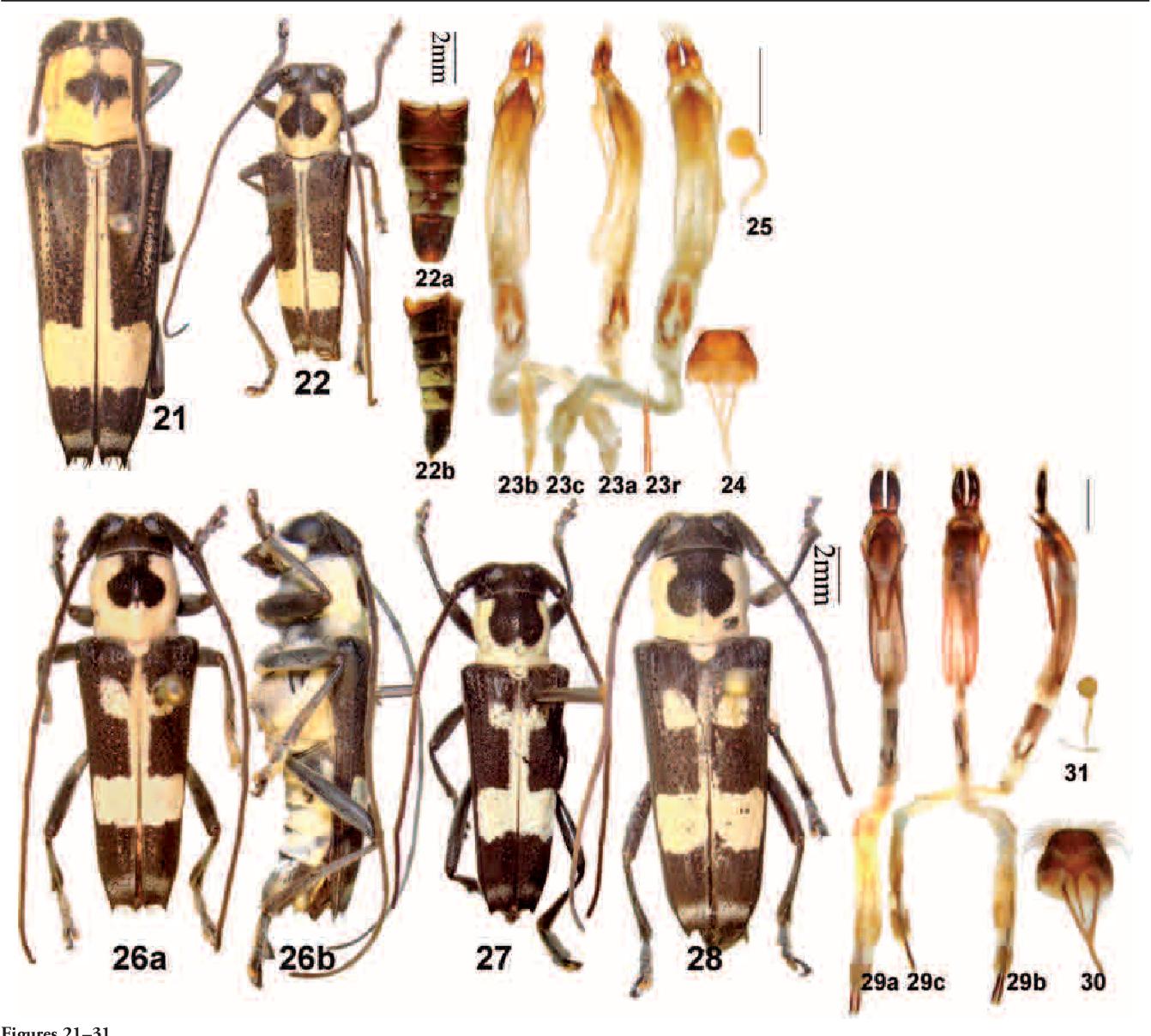figure 21–31