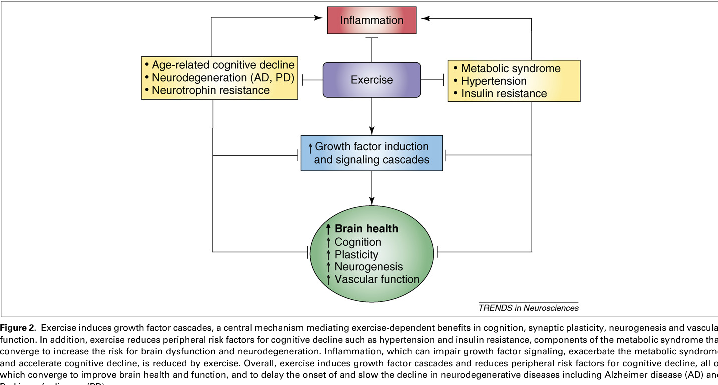 Exercise builds brain health: key roles of growth factor