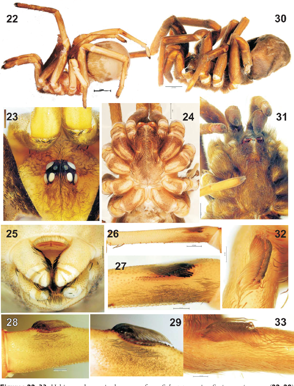 figure 22–33