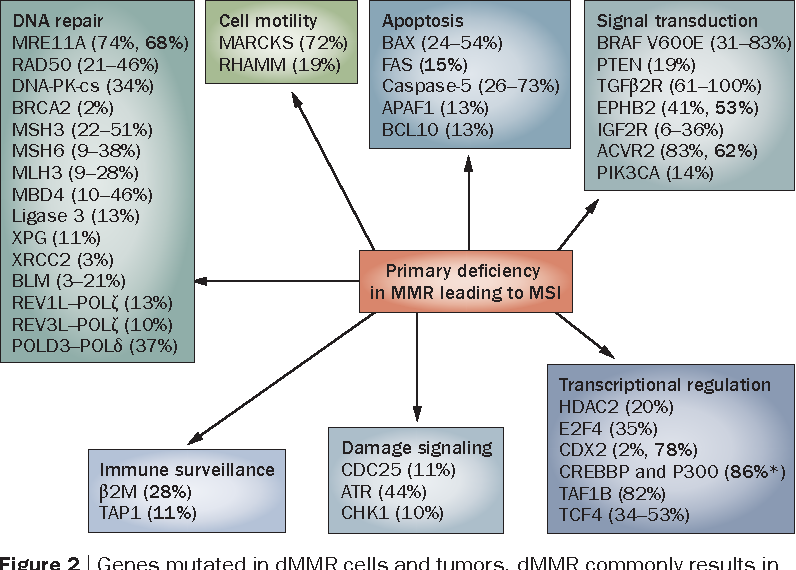 Mismatch Repair Deficient Colorectal Cancer In The Era Of Personalized Treatment Semantic Scholar