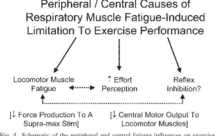 Pdf Exercise Induced Respiratory Muscle Fatigue Implications For Performance Semantic Scholar