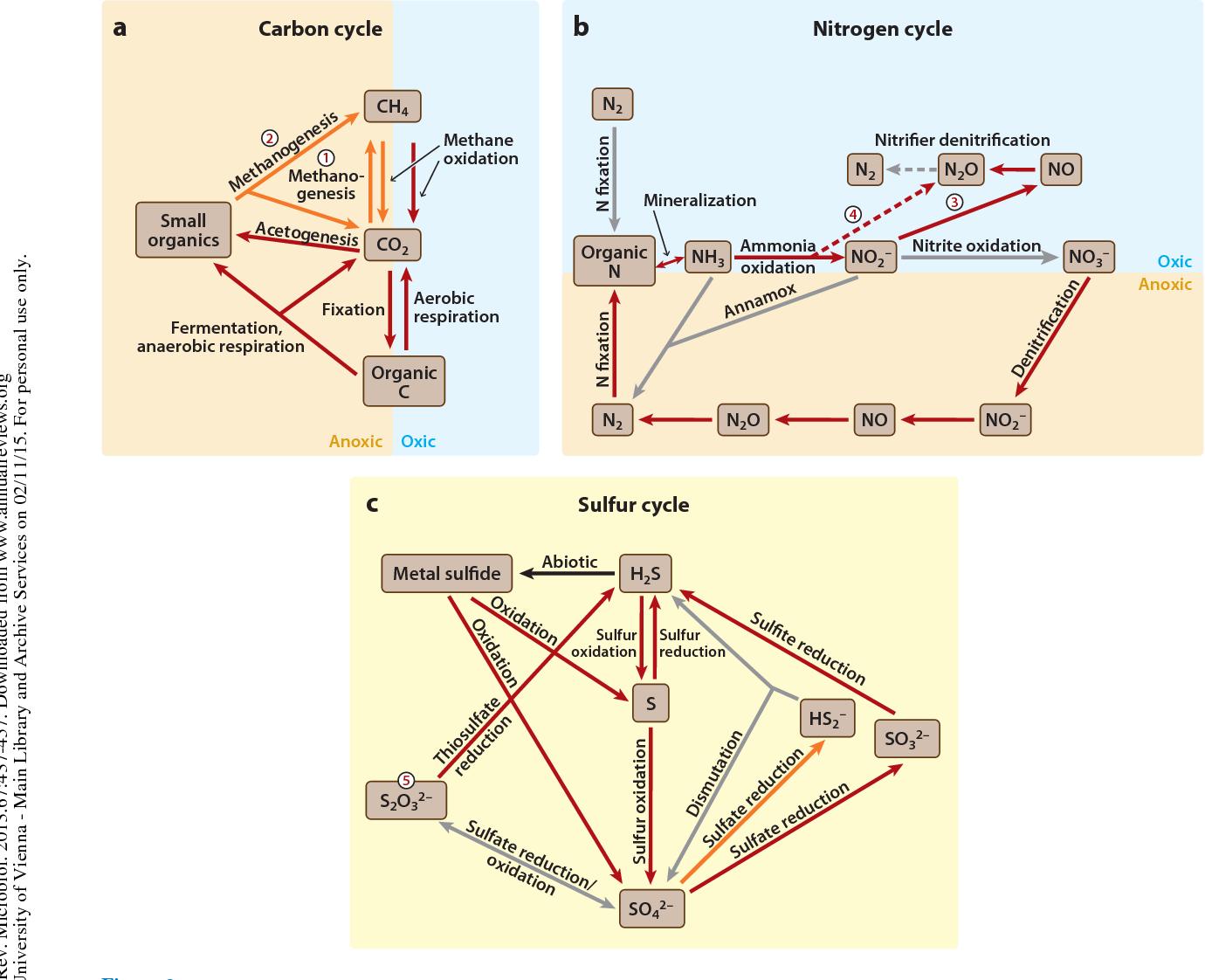 Archaea in biogeochemical cycles pdf