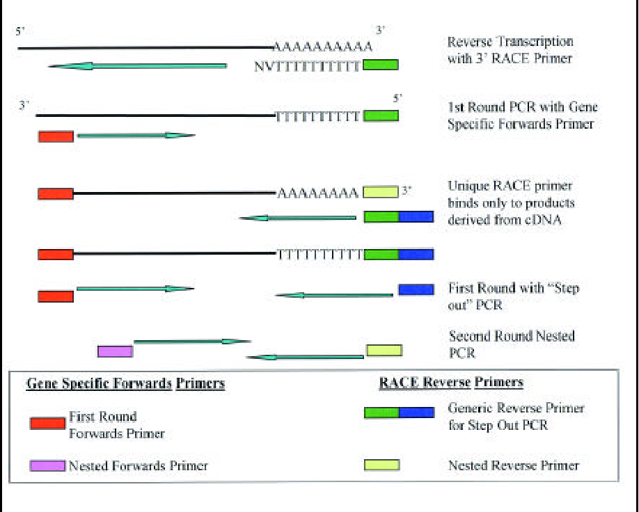 Figure 1 from Exclusive amplification of cDNA template