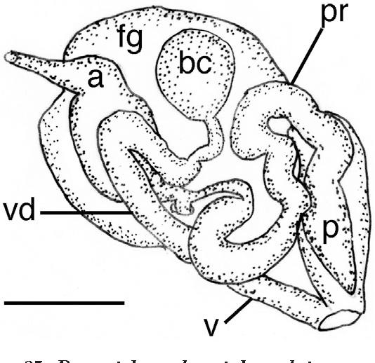 figure 85