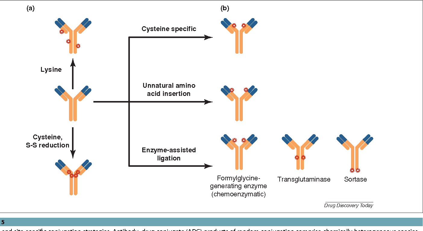 Figure 7 from Antibody-Drug Conjugates: Design