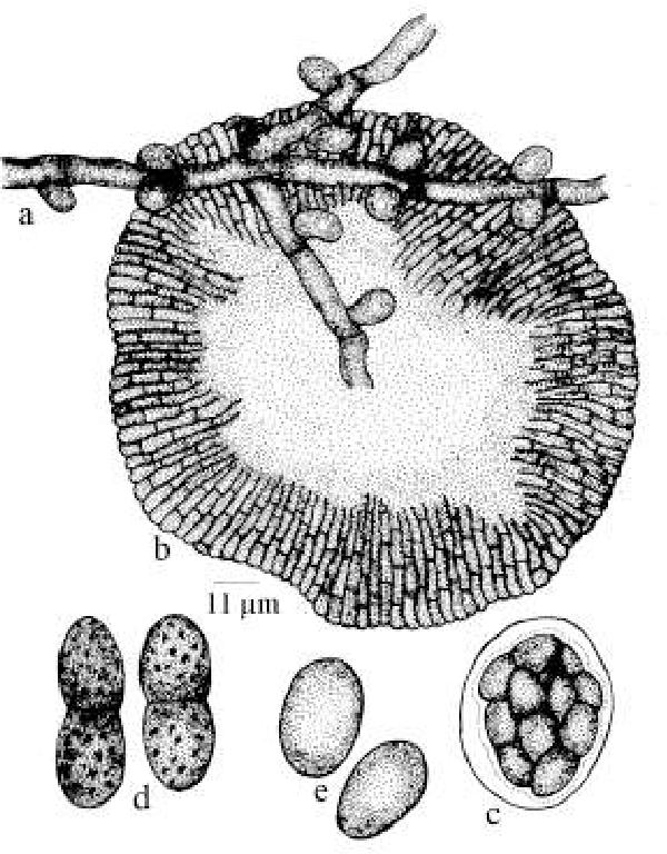 figure 175