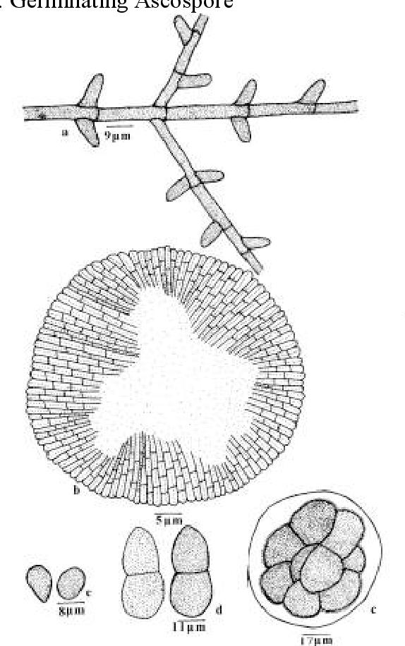 figure 194