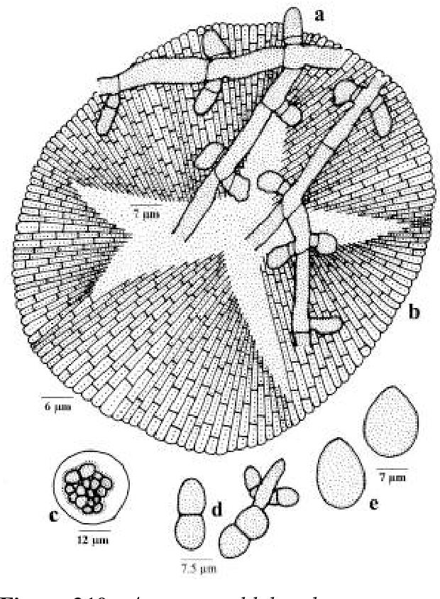 figure 210