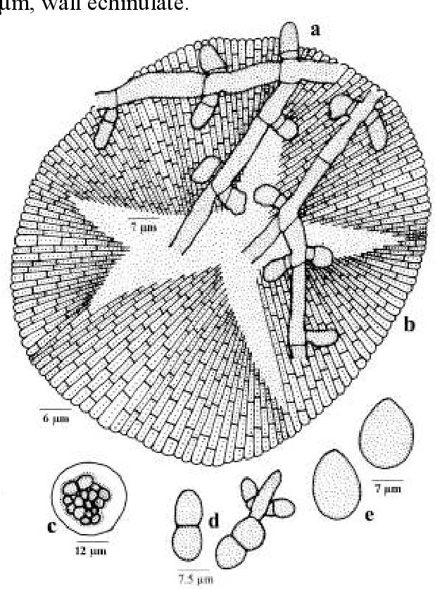 figure 211