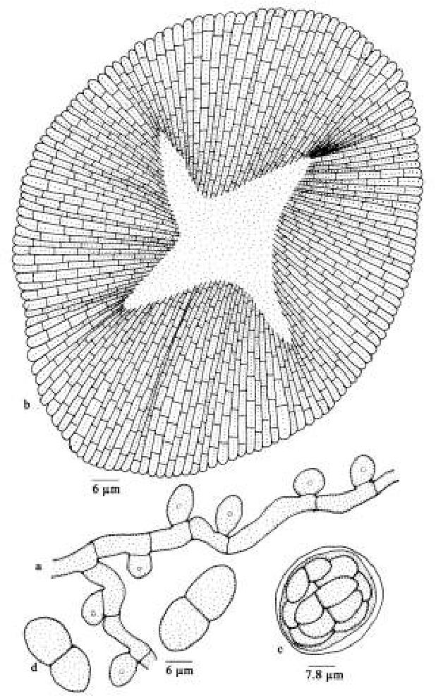 figure 215