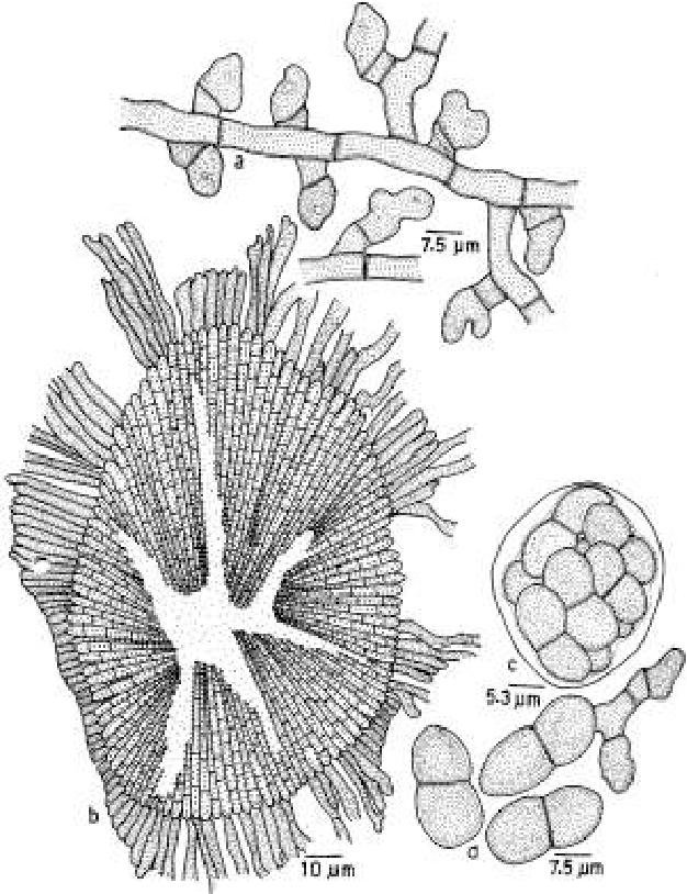 figure 223