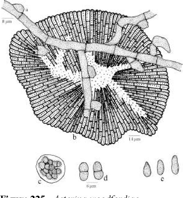 figure 225