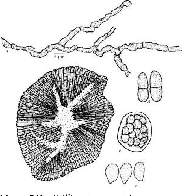 figure 246