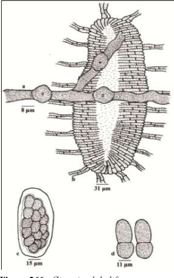 figure 266