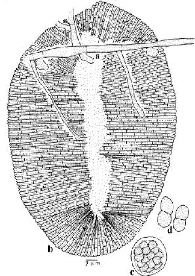 figure 279