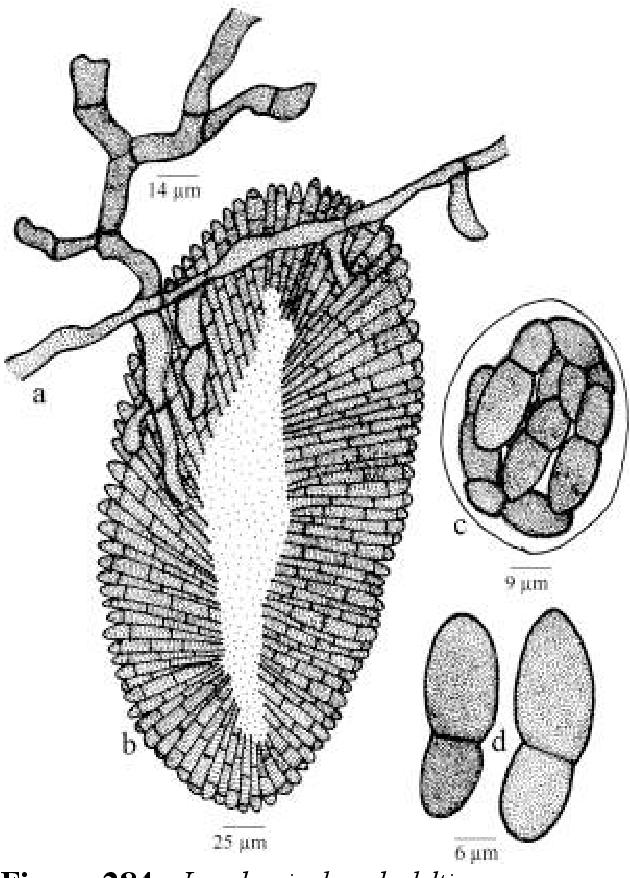 figure 284