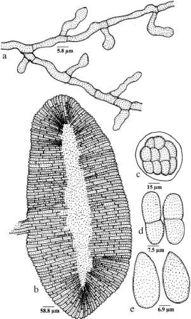 figure 294