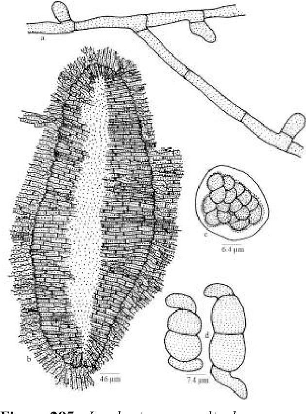 figure 295