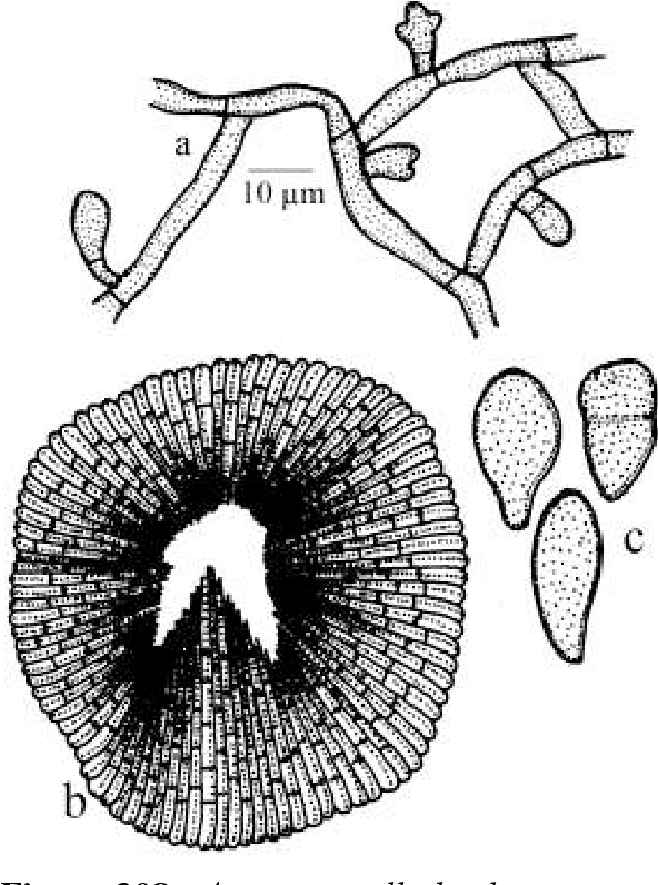 figure 308