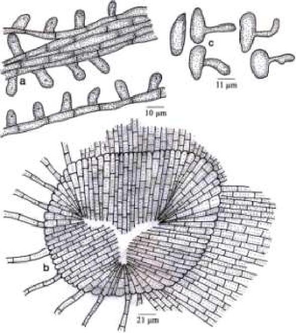 figure 310