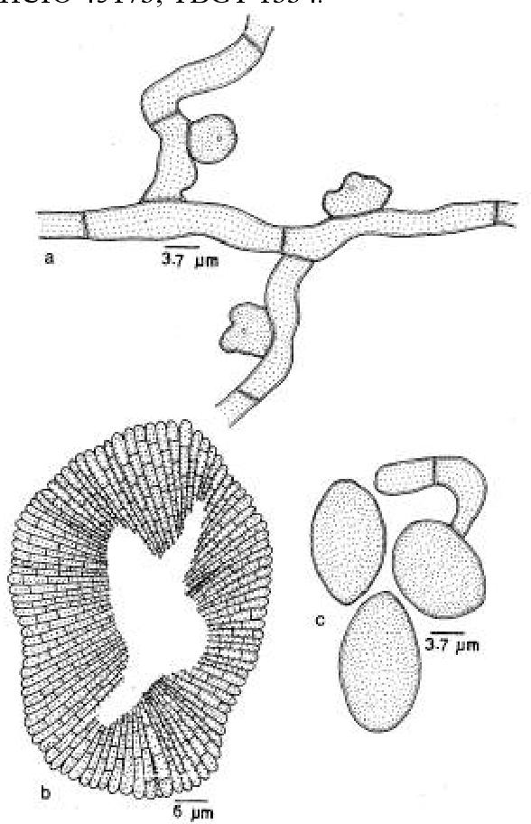 figure 311