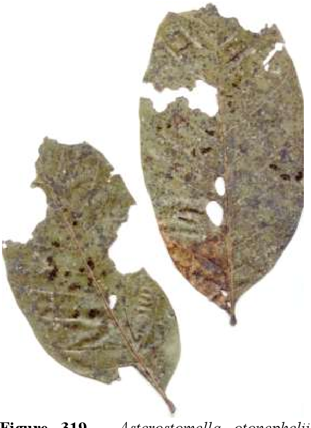 figure 319