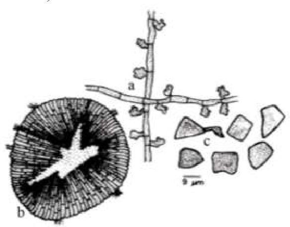 figure 333