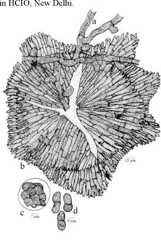 figure 104