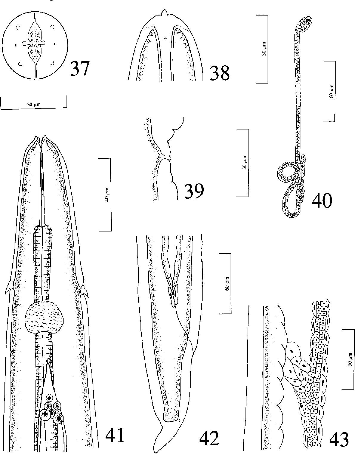 figure 37-43