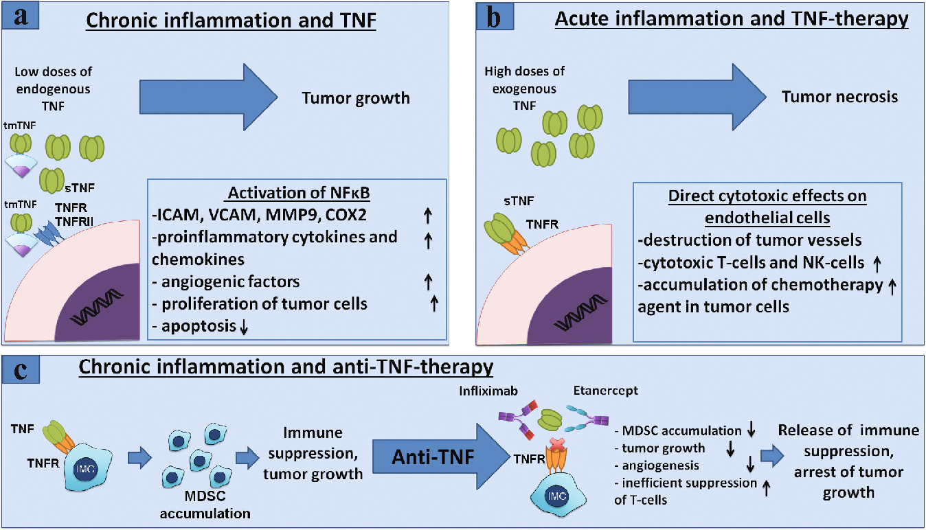 Figure 2 from Myeloid-derived suppressor cells and