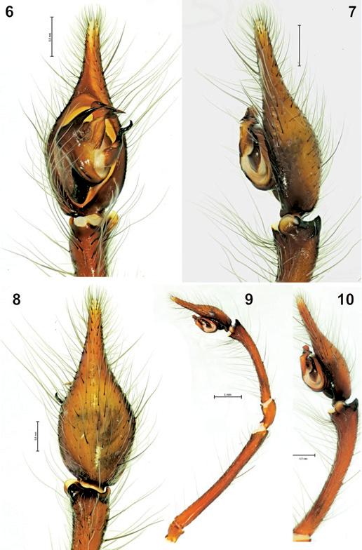 figure 6–10
