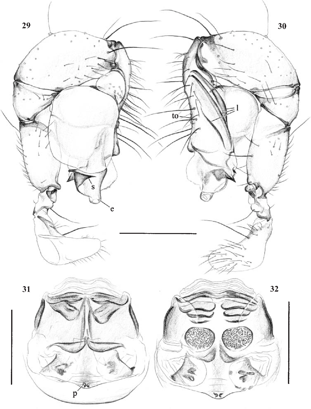 figure 29–32