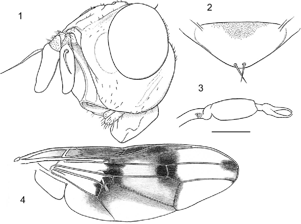 figure 1–4