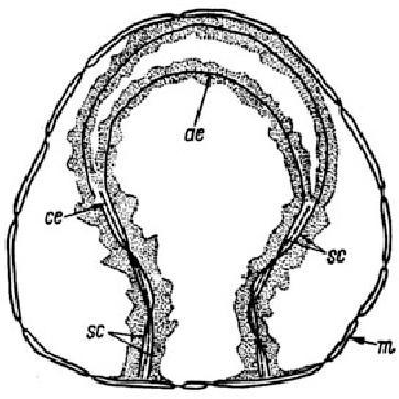 figure 91