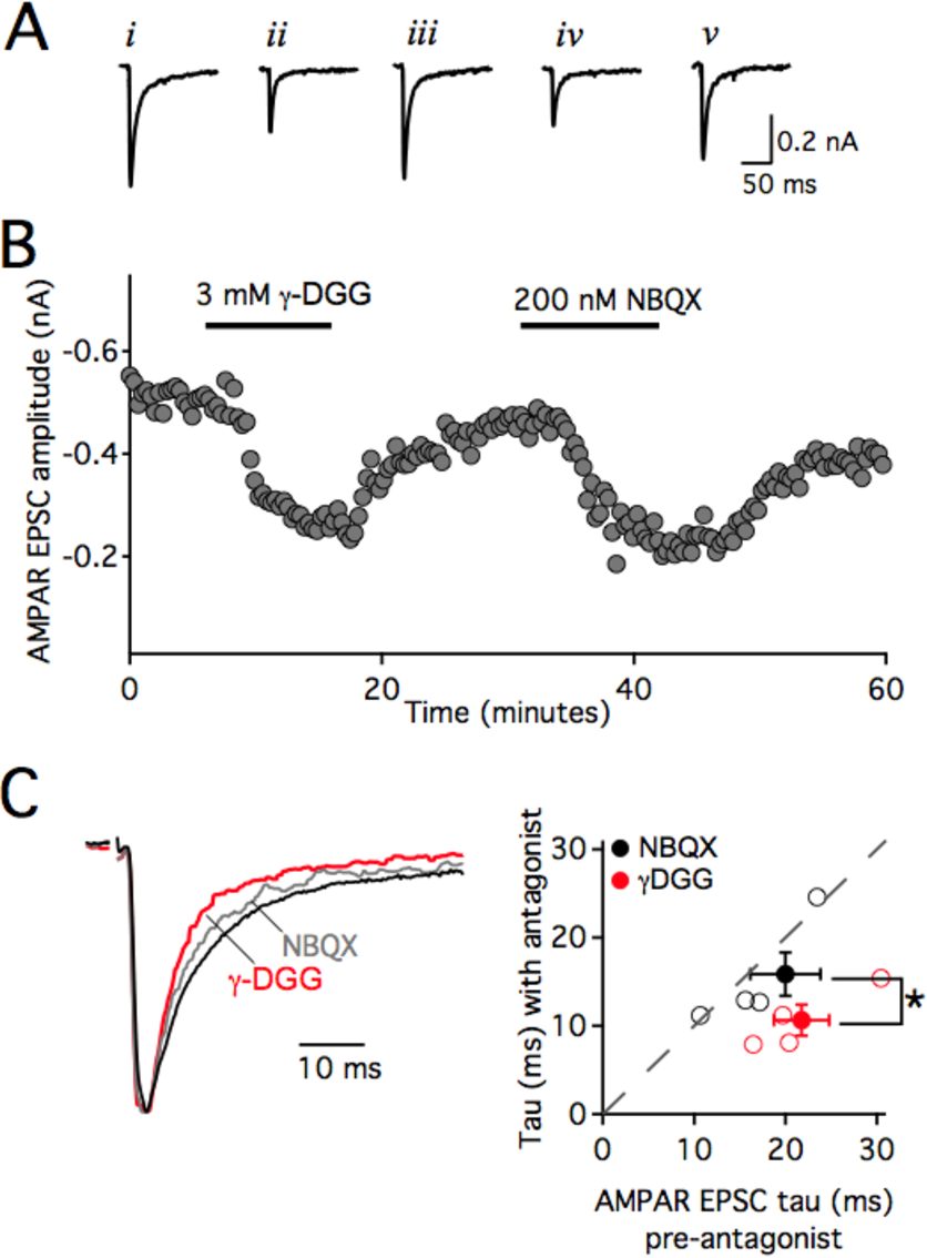na50 wiring diagram figure 4 2 from mechanisms shaping excitatory transmission at the  figure 4 2 from mechanisms shaping