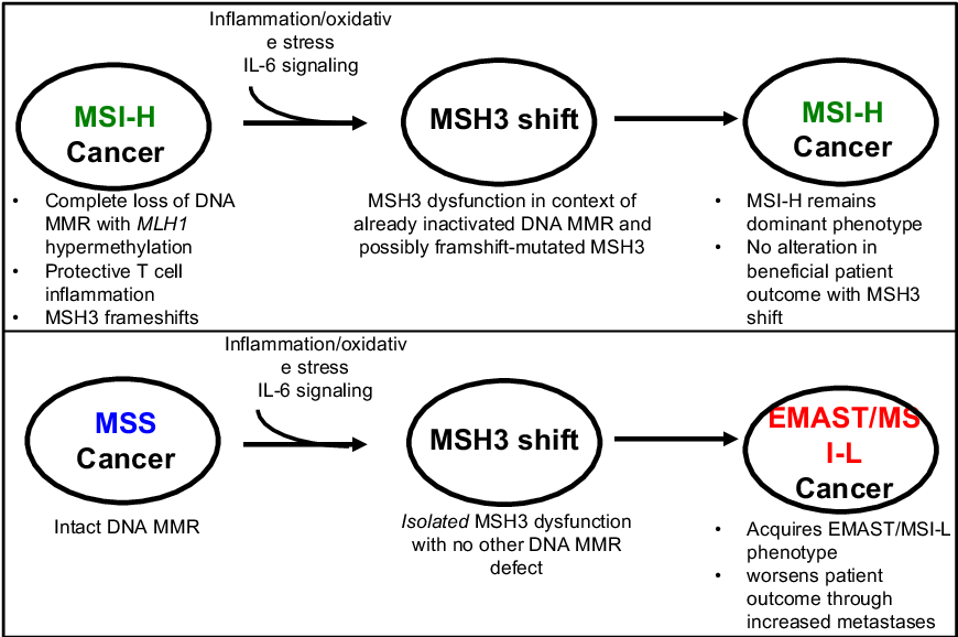Figure 3 From Microsatellite Instability Pathway And Emast In Colorectal Cancer Semantic Scholar