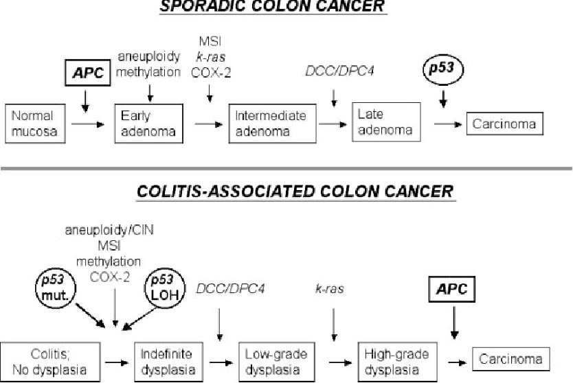 Figure 1 From Inflammation And Cancer Iv Colorectal Cancer In Inflammatory Bowel Disease The Role Of Inflammation Semantic Scholar