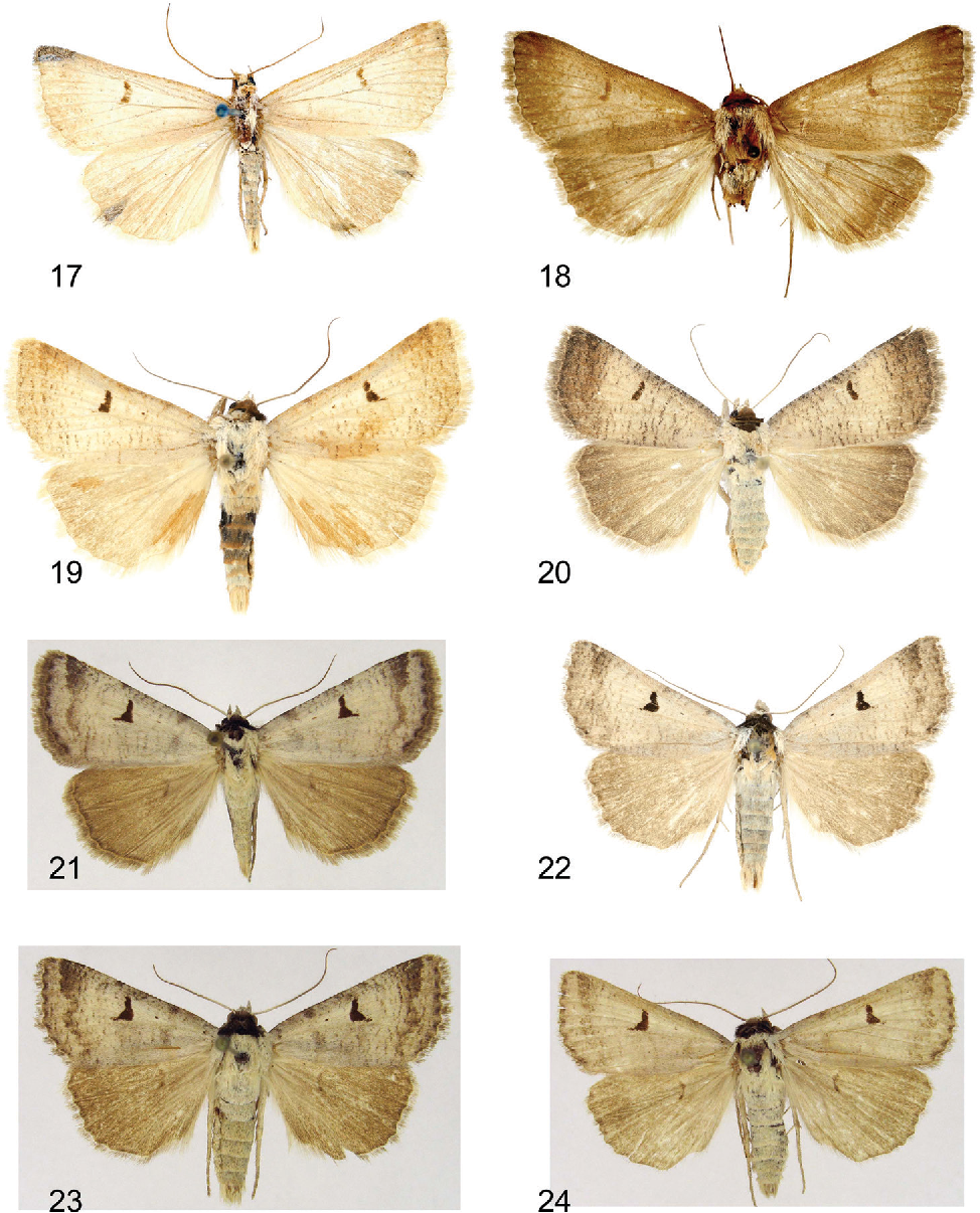 figure 17–24
