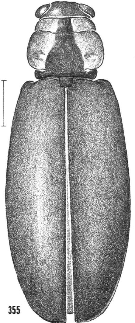 figure 355