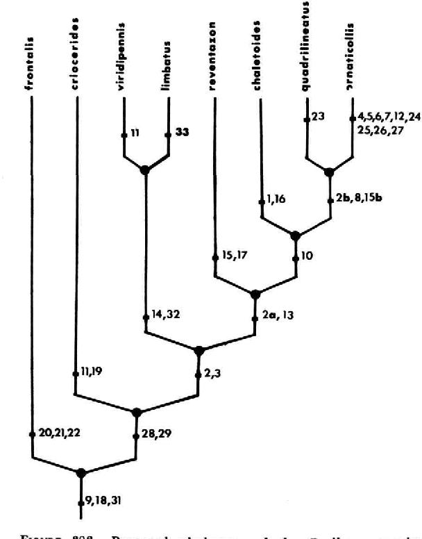 figure 383