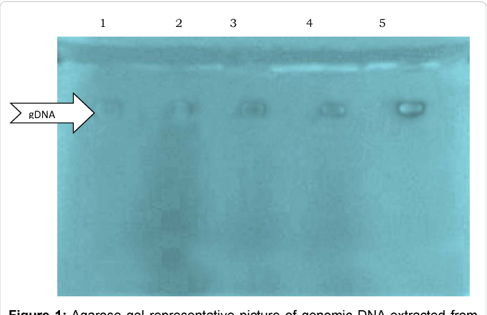 what type of mutation is ccr5 delta 32
